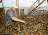 The Shell Game: for the love of Louisiana oysters